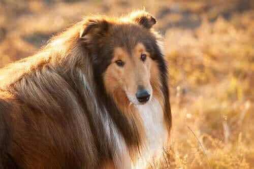 Forebygging av diabetes hos hunder – Endring av vaner