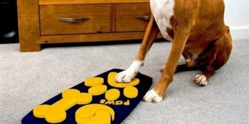 Den første fjernkontrollen for hunder