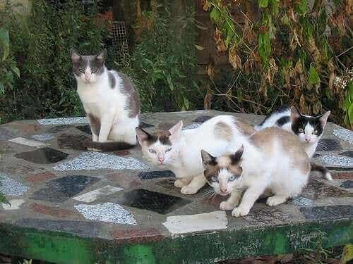 Å forstå katter: En guide til katteeiere