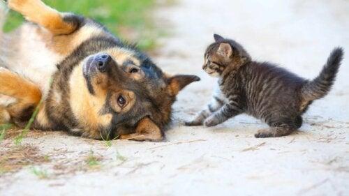 En katt og en hund som er ute