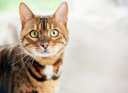 En katt som stirrer