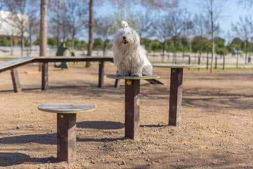 En hund som sitter på toppen av en stolpe