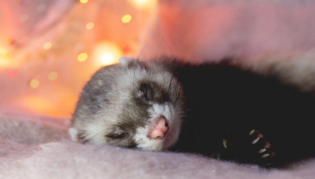 Ilderes tunge søvn