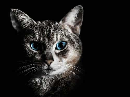 En katt i mørket