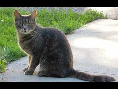 En katt utendørs
