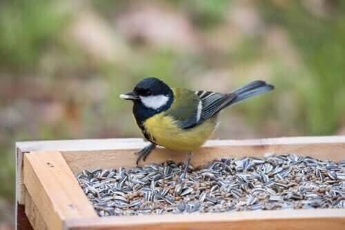 Giftige mattyper du aldri bør mate fugler med