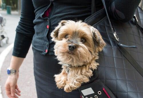 En hund i en bag