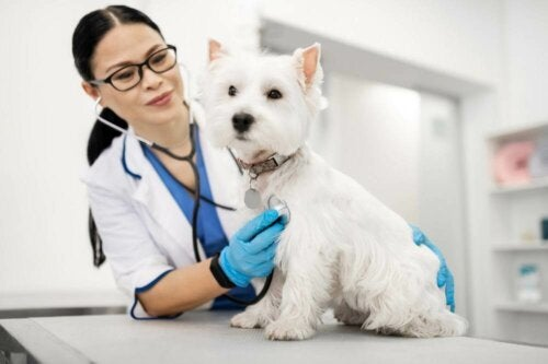 En hund hos veterinæren