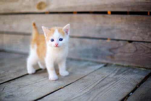 Å pleie en foreldreløs nyfødt kattunge
