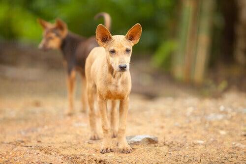 Et par unge gatehunder