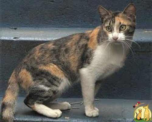 En katt på et trappetrinn