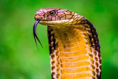 De ti giftigste dyrene i verden
