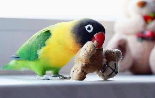 En kjæledyrfugl som leker med et leketøy