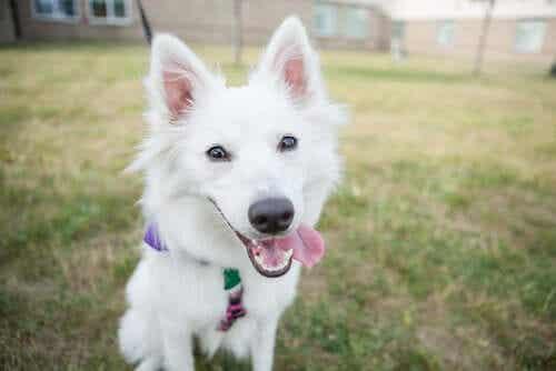 En hund som leker i en bakgård.