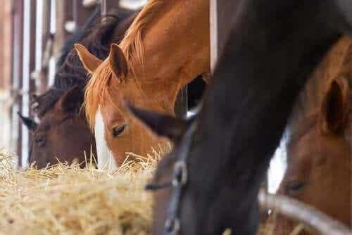 Hvilken type fôr bør du fôre hesten din med?