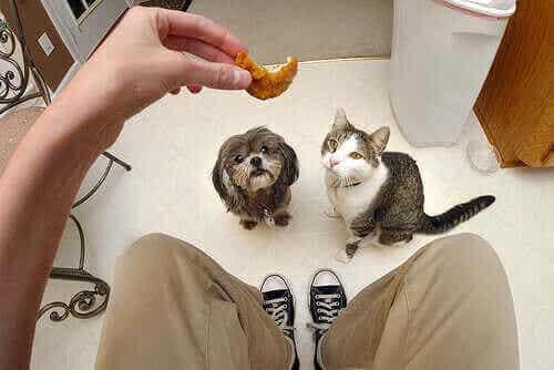 Hvorfor kattemat og hundemat er forskjellig