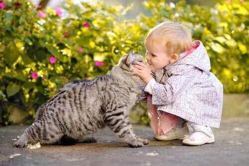 Kan en katt og en baby leve lykkelig sammen?