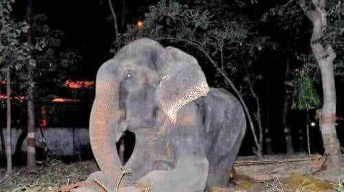 En elefant som ligger