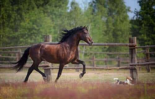En hest og en liten hund som løper ute.