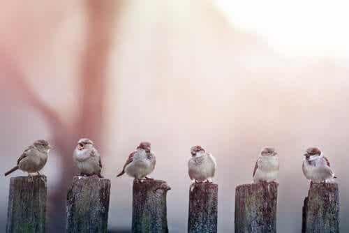 En rekke fugler.
