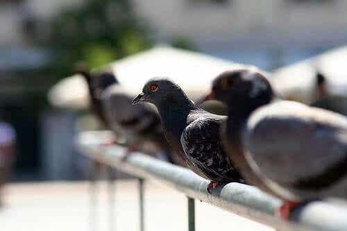 Fugler som sitter på en rekke.