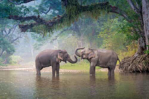11 arter som er på randen av utryddelse