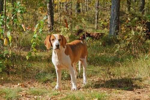 Hunder i FCI-gruppe 6: Raseklassifisering