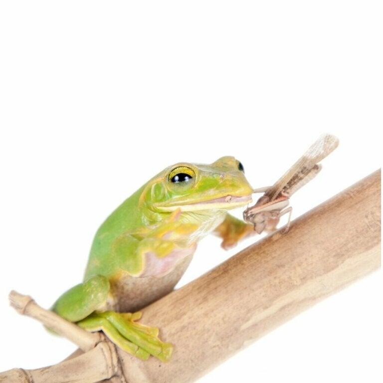 Hva spiser egentlig frosker?