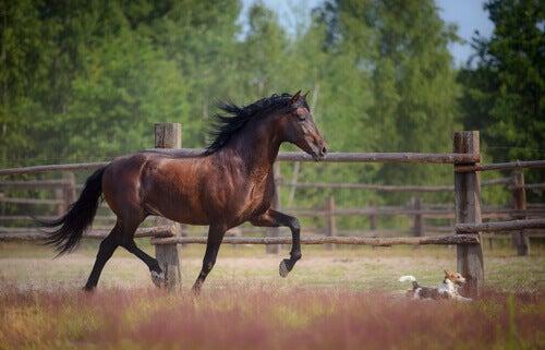 Fascinerende fakta om hester