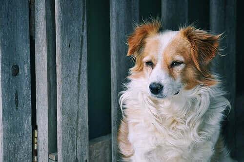 Uavhengige kjæledyr – Klarer noen seg bedre alene enn andre?