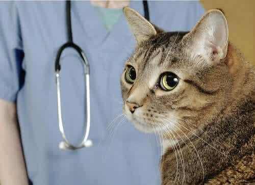 En katt hos veterinæren