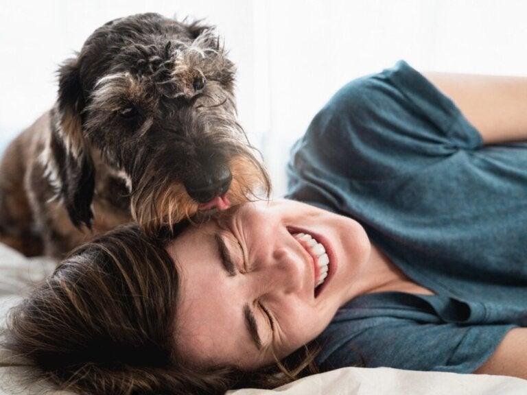 De 11 mest hengivne hunderasene