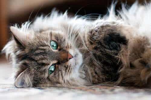 En katt som ligger