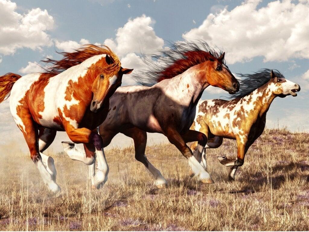 Hestetypen mustang: Opprinnelse og karakteristikker