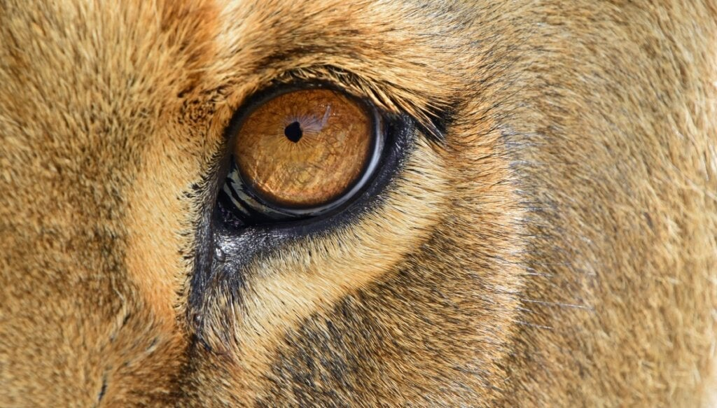 De 6 pattedyrene med de mest utviklede sansene