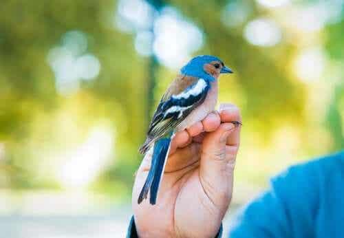 En fugl på en persons hånd