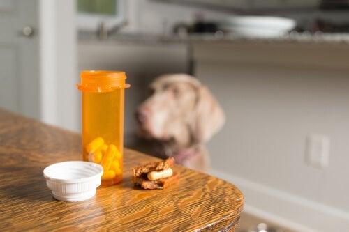 De 7 bivirkningene av kortison hos hunder