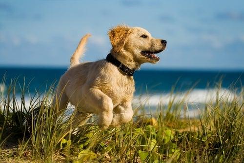 Hunders hemmeligheter: 10 ting hunden ikke forteller deg om helsen sin