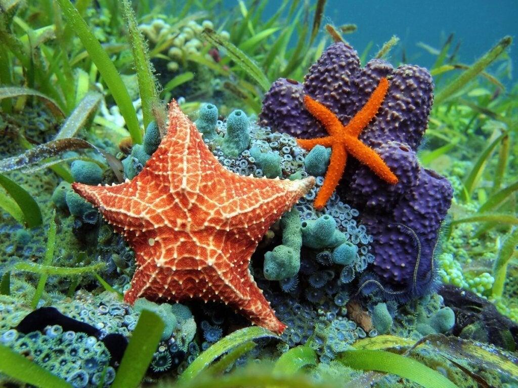 Hva spiser sjøstjerner?