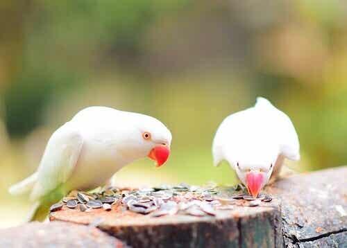 Å skape det ideelle miljøet for eksotiske fugler
