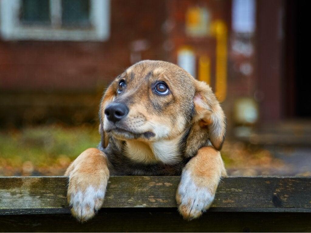 Forlatte hunder: 70 % av verdens hunder