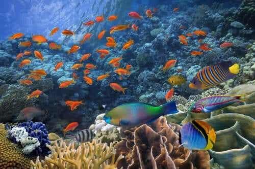 Tropisk fisk som svømmer