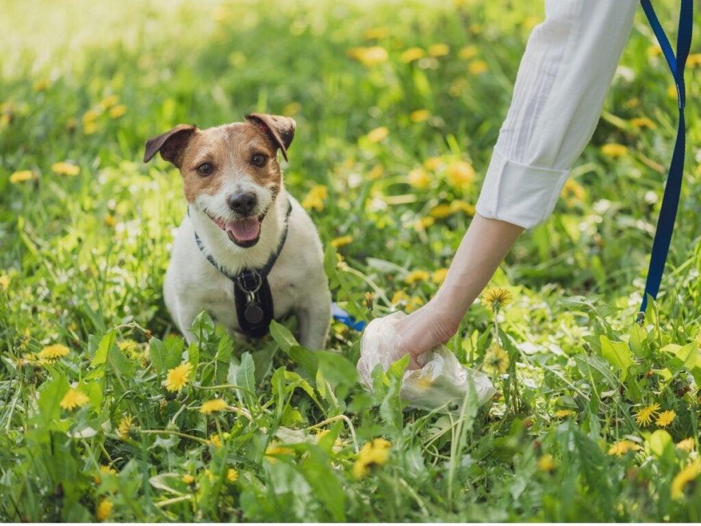 Typene avføring hos hunder og hva de sier om deres helse