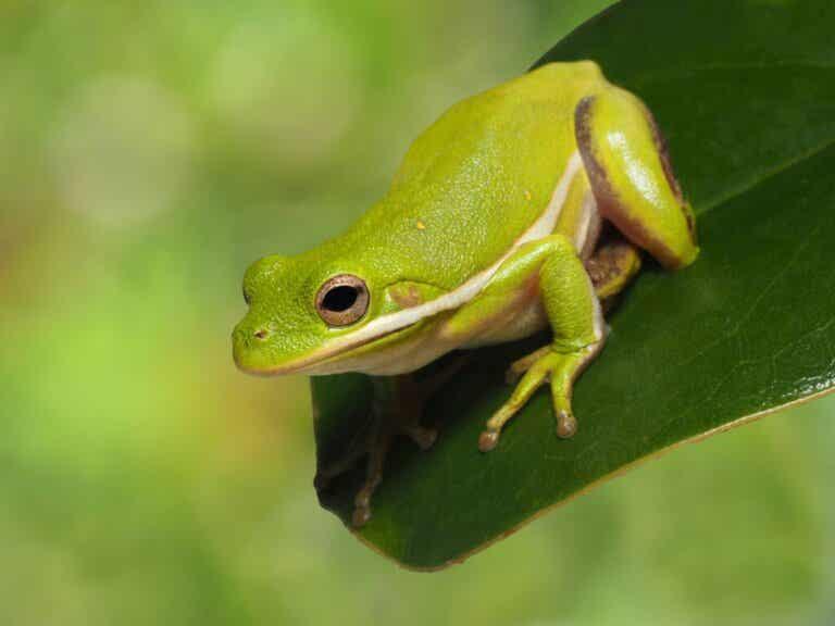 10 kuriositeter om frosker