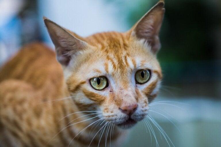 Spisevegring hos katter: Alt du trenger å vite