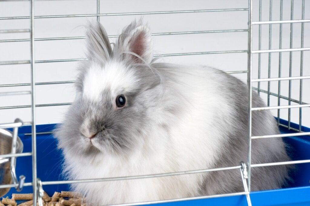 Hvorfor biter kaninen min i buret sitt?