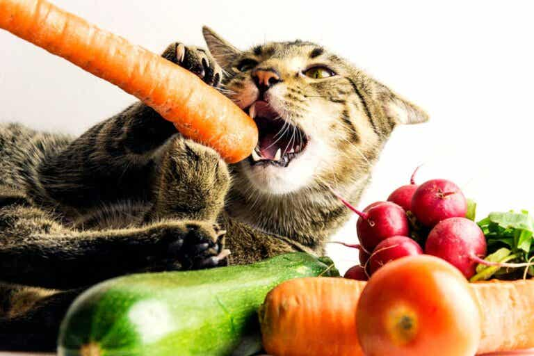 Veganske kosthold for kjæledyr er mangelfulle, sier eksperter