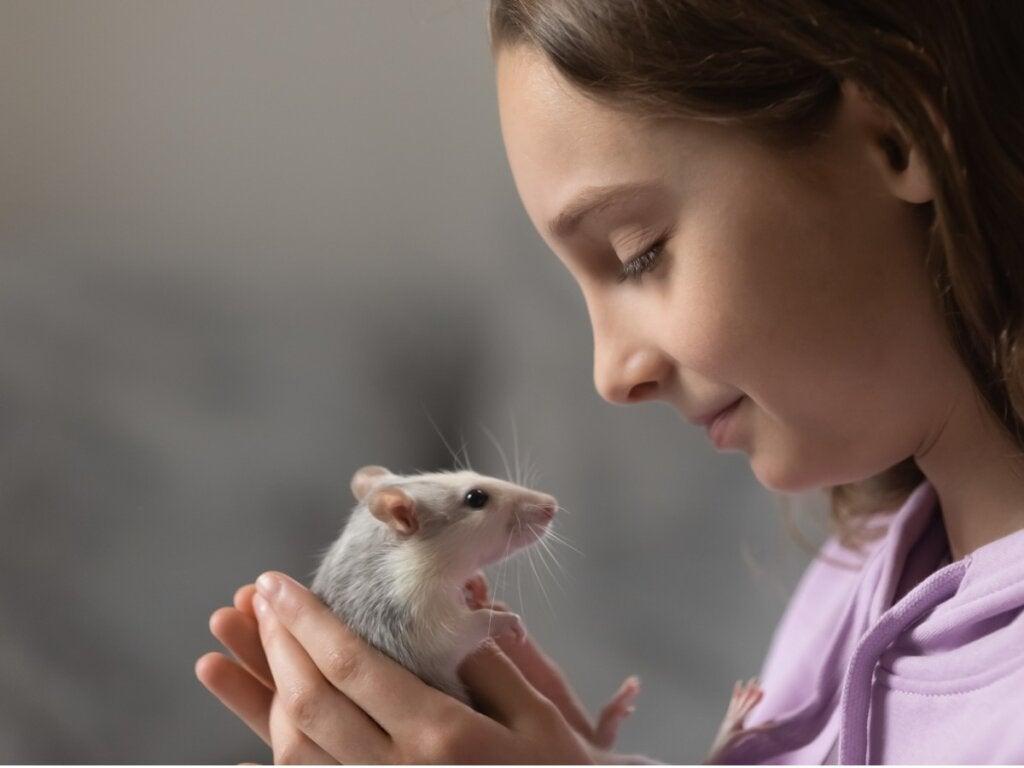 9 typer rotter man kan ha som kjæledyr