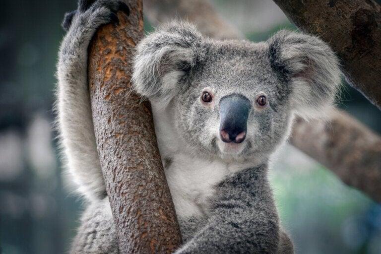 De 12 dyrene som er mest påvirket av klimaendringer