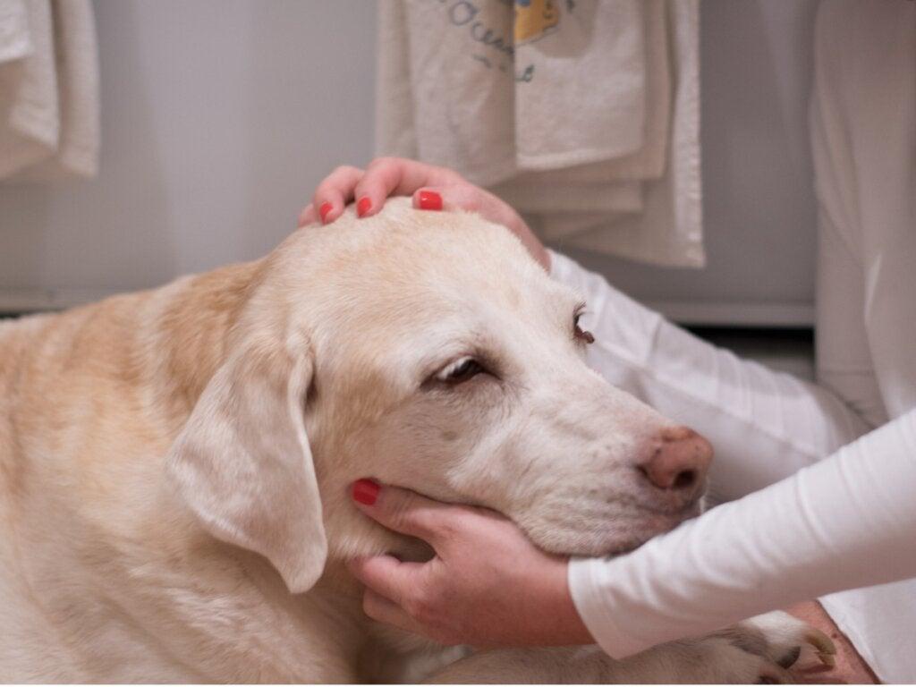 12 tegn på at hunden din kan ha kreft